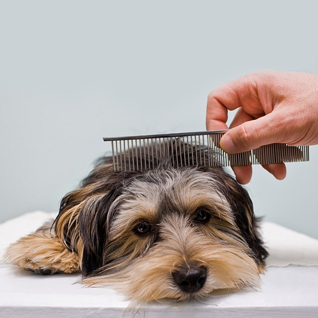 Pet Stainless Steel Long Row Comb