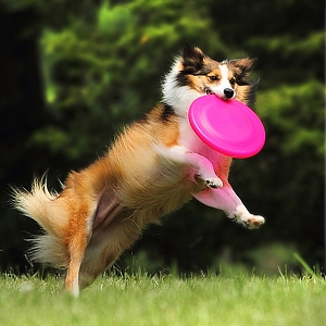 Pet Dog Bite Resistant Soft Frisbee